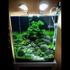 Okeanos Aquascaping Aquascape With Great Use Of Moss Planted Aquarium Pinterest
