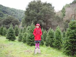 little hiccups christmas tree farm visit 2016