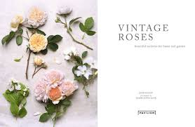 family home and garden vintage roses beautiful varieties for home and garden georgianna