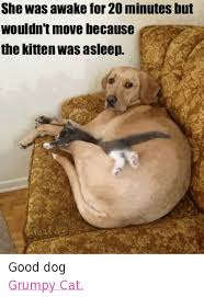 Grumpy Dog Meme - 25 best memes about good dog good dog memes