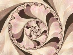 seashell wallpaper fractal art gallery