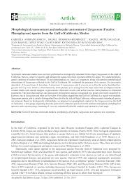 Canopy Synonyms by Morphological Reassessment And Molecular Assessment Of Sargassum
