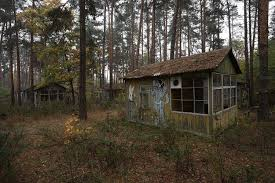 Texas forest images 10 genuinely haunted forests in texas will terrify you jpg
