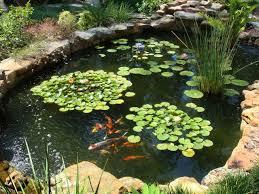 download koi fish pond ideas garden design