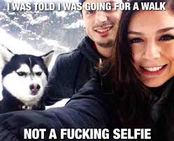 Pissed Off Meme - best of the jealous pissed off husky meme weknowmemes