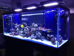 stunner led aquarium light strips shane u0026 catherines mixed reef saltwater fishy pinterest