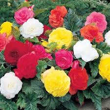 Long Blooming Annual Flowers - top 5 annuals for 2014