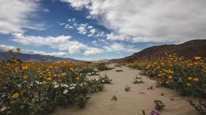 super bloom 4k time lapse anza borrego ca youtube