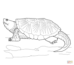 common snapping turtle coloring free printable coloring pages
