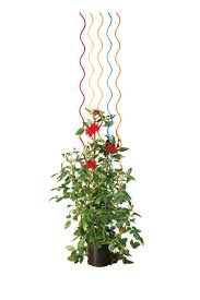 tomato stakes rainbow spiral plant supports gardeners com