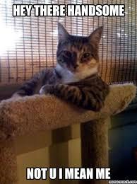 Handsome Meme - cat