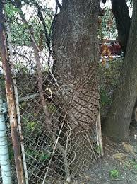time for an interesting photo tree consumes fence basement science