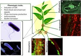 functional soil microbiome belowground solutions to an