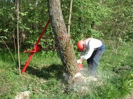 reipal tree jack felling tool