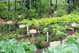 how to start a vegetable garden for beginners vegetable gardening for beginners