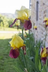 fleurs dans une chambre extérieurs de la chambre d hôtes peyrecout 81640 laparroquial
