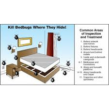 Kill Bed Bugs Kills Bed Bugs In Uae Homes With Non Toxic Safe To Use Cimexa