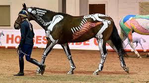 Horse Skeleton Halloween Horses Inside Out Youtube