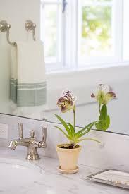 Most Fragrant Indoor Plants Best Indoor Plants 6 Flowering Orchids To Grow Gardenista