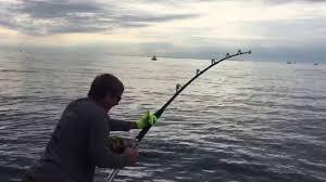 tuna fishing in cape cod bay youtube