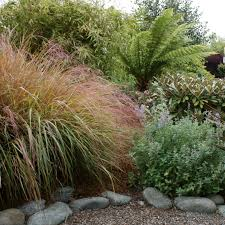 nw native plants ferns for every garden north coast gardening