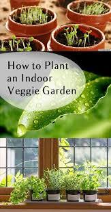 Indoor Vegetable Container Gardening - best 25 indoor vegetable gardening ideas on pinterest vegetable