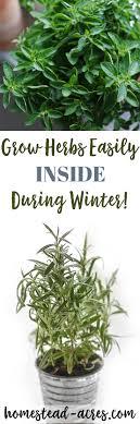 herbs indoors growing herbs indoors tips for growing herbs indoors in the