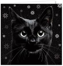 cat cards from 11 different animal charities