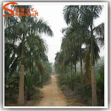18ft looking palm tree plants palm tree
