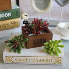 popular succulent plants mini buy cheap succulent plants mini lots