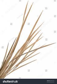 dried ornamental grass clump highres stock photo 69337216