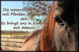 pferde spr che zitat pferdekontakt orenda ranch tiergestützte