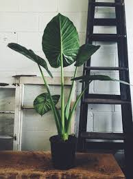 Tropical Potted Plants Outdoor - best 25 plants indoor ideas on pinterest house plants plants