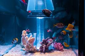 luxurious furnitureland south fish tank bed reviews