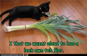 Leek Meme - i thot we wuznt aloud to has a leek awn teh flor i can has