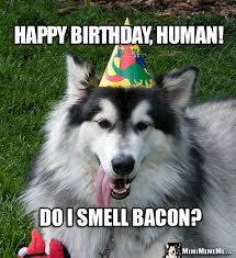 Birthday Memes 18 - funny birthday dawgs dog happy birthday humor doggie woof day