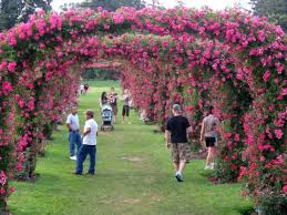 get out and smell the roses this springitonpa at the rose garden