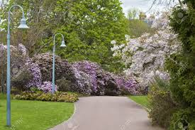 beautiful spring scene of blossoming trees and bushes in public