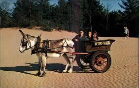 freeport me desert of maine pedro the burro pulling cart old