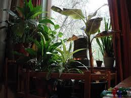 home design easy houseplants to grow farmers39 almanac with