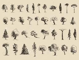 Oak Tree Drawing Oak Tree Sketch Clipart Collection