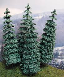 blue spruce scenery landscaping trees coniferous tree blue spruce 5 75