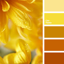 monochrome orange palette warm bright colors have a very positive