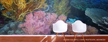 underwater murals sea life wallpaper sea life underwater mural wallpaper adds color to walls