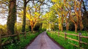misc earth road wonderful fence country grass sun path trees