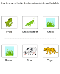 food chain worksheets kids preschool worksheets educational