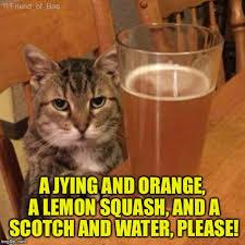 Drunk Cat Meme - angry drunk cat memes imgflip