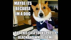 Cute Dog Memes - cute dog memes youtube