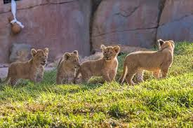 san diego zoo safari park tips for visiting with your family