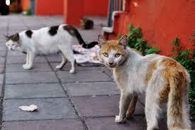 gerüche die katzen nicht mö katzen verscheuchen 8 tipps haushaltstipps net